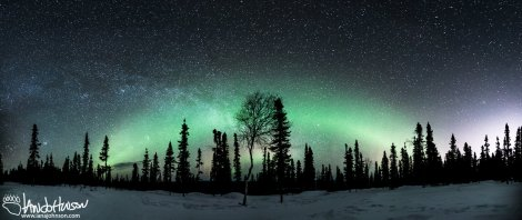 A lone birch stands as the focal points of this large panorama. The city lights of Fairbanks show up on the right.