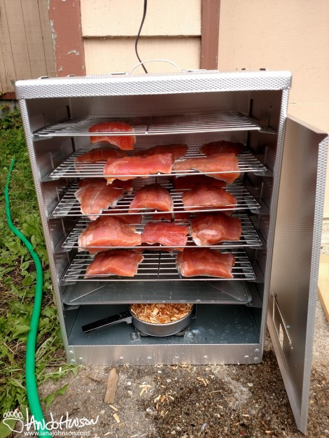 A smoker full of color, red salmon just before smoking.