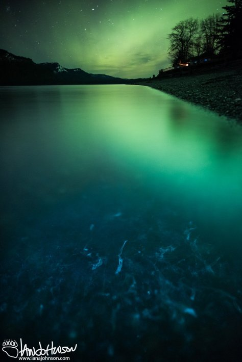 Icy Strait Point, Northern Lights, Hoonah, Alaska, Southeast Alaska, Phytoplankton, Biolumination, Bioluminescence