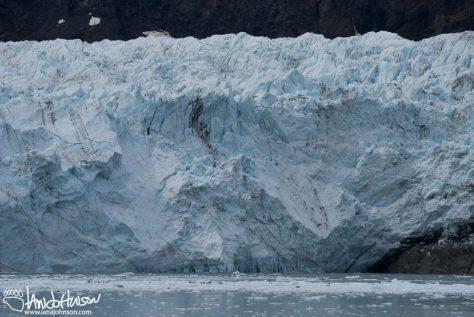 Harbor Seals, Tidewater Glacier, Marjorie Glacier
