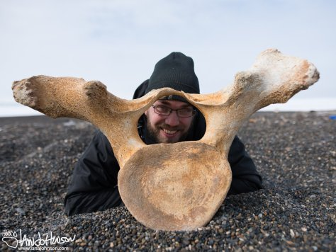 Barrow, Alaska, Bowhead Whale, Vertebrae