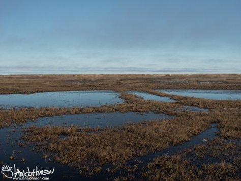 Utqiaġvik, Tundra, Alaska