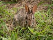 Hare, Texas