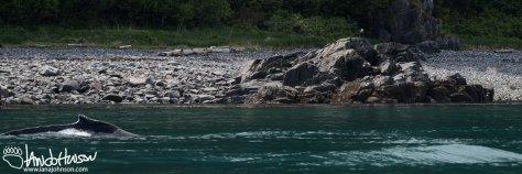 Whale, Eagle, Alaska, Southeast Alaska, Whale Watching