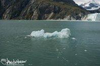 Iceberg,Glacier Bay National Park, Southeast Alaska, Alaska