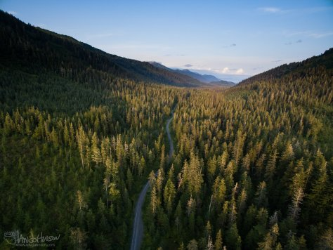 Tongass, National Forest, Aerial, Bird-eye, Roadless Rule, Old Growth, Spruce, Hemlock, Trees