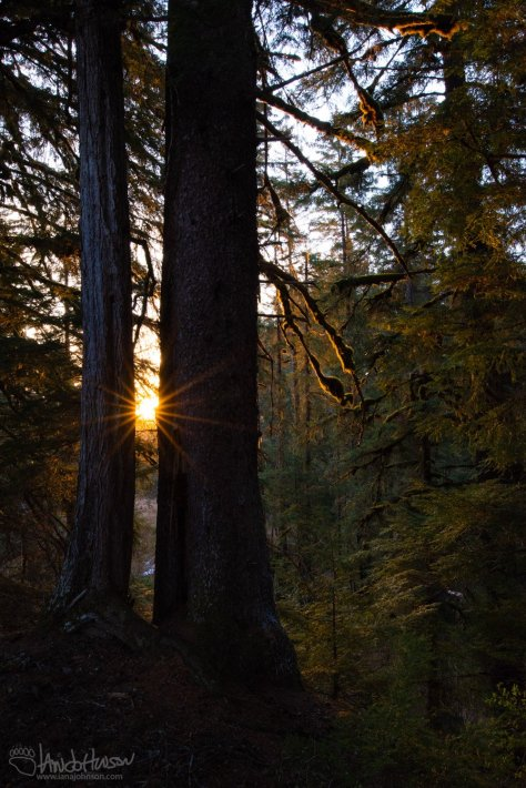 Sunrise, old growth, tongass