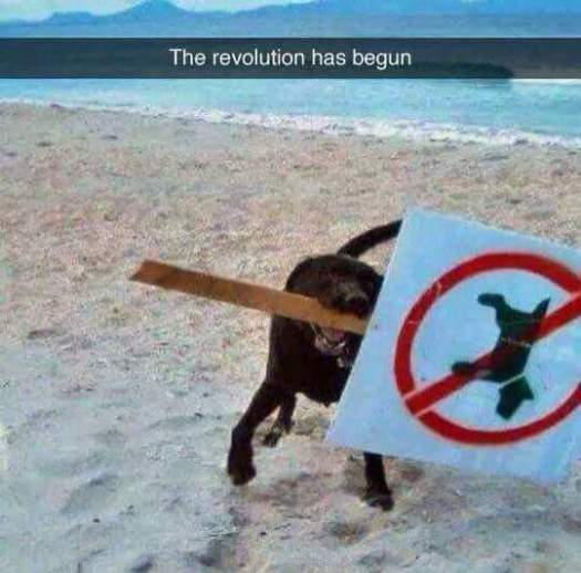 The revolution has begun...