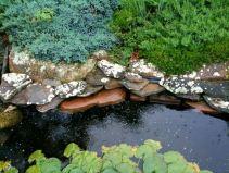 july-8-lichen