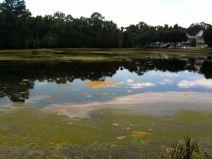 october-14-celebration-lake-needs-cleaning