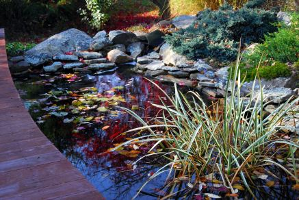november-8-pond-cleaning