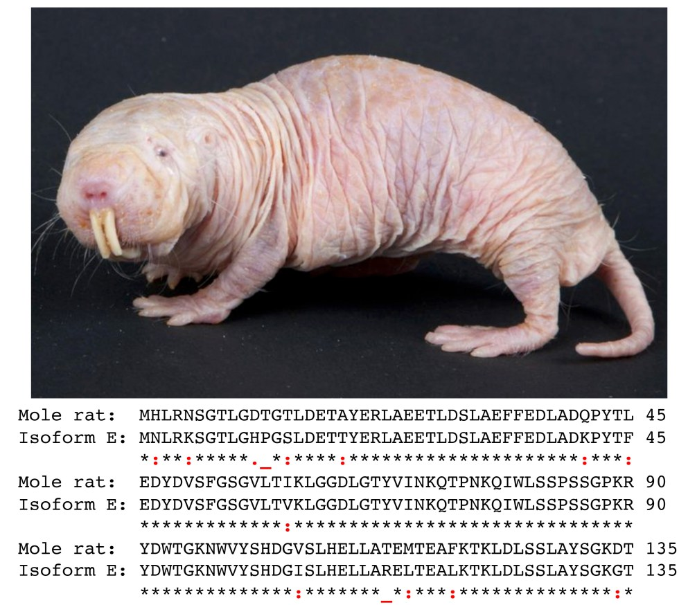 10 Naked molerat sequnece and picture