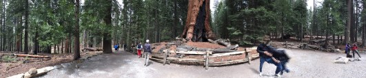 360 Panorama at the Grizzly Giant