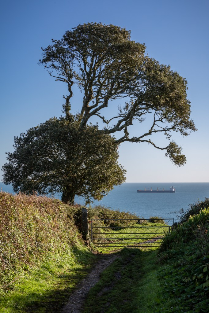 Tree and ship