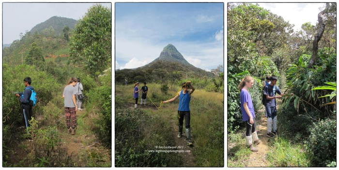 Vertical zonation studies of floral diversity on the forest path to Sri Pada