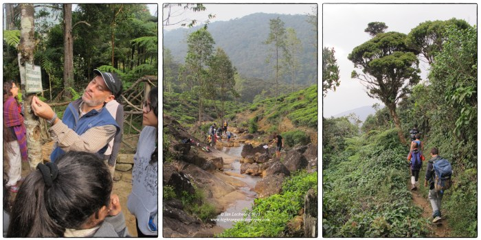 Snapshots of the OSC Biology class and their teacher Tim Getter in action. On the right the ES&S  class descends from the Peak through sub-montane tropical rainforest.