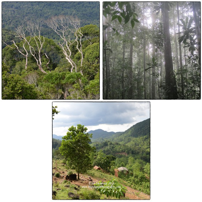 Images from Sinharaja rainforest and its edges: Emergent layer on Moulawella, Misty primary forest, mixed cultivation on the north-west edge of the protected area.