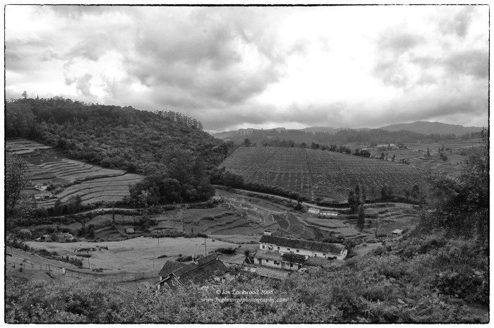 Cairn Hills Shola in the Nilgiri Hills (left side of image) with adjoining eucalyptus plantations and former grasslands converted to agricultural plots.