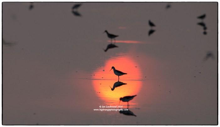 Sunrise at Vankalai Bird Sanctuary (January 2016)