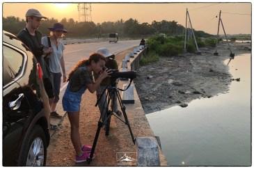 Looking at flamingos at sunset near Vankalai