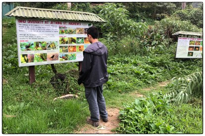 Lenny at the St. Andrew's wetlands with boards that were put in place by Ishanda Senevirathna.