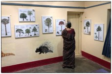 A distinguished guest (Sridhar's mother) views the gallery of Dipterocarp images by Nirupa Rao taken from the Pillars of Life book.