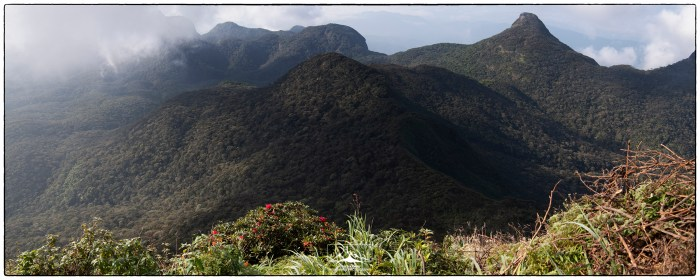 Peak_Wilderness_Rhodo_Pan_1(MR)(01_20)