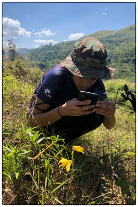 DP1 student Rika photographing a Daffodil orchid (Ipsea speciosa). She had been with me on the WWW Highlands trip when we failed to find it and so it was exciting to find almost a dozen flowers spread over an area of former pantana in tea. (January 2020)