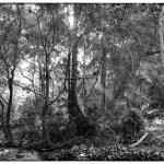 Thattekad_primary_forest_light_iP_1(MR)(B&W)(12_19)