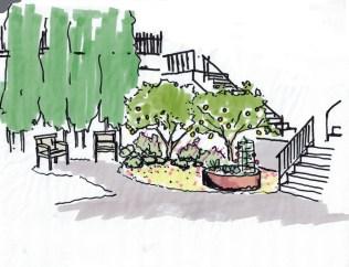 Berkeley Cottage Garden Concept Lemon Trees07112014