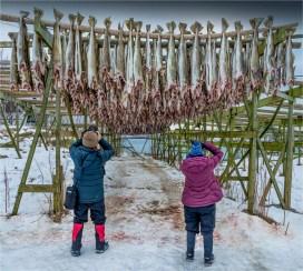 Henningsvaer-Lofoten-2016-NOR0018-18x20