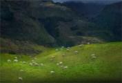 Glenorchy-Autumn-2016-NZ259-17x25