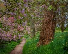 Mintern-Gardens-2017-ENG0789333