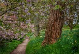 Mintern-Gardens-2017-ENG079-18x26