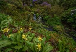 Mintern-Gardens-2017-ENG086-18x26