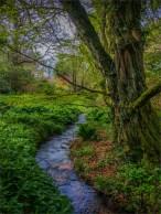 Mintern-Gardens-2017-ENG100196