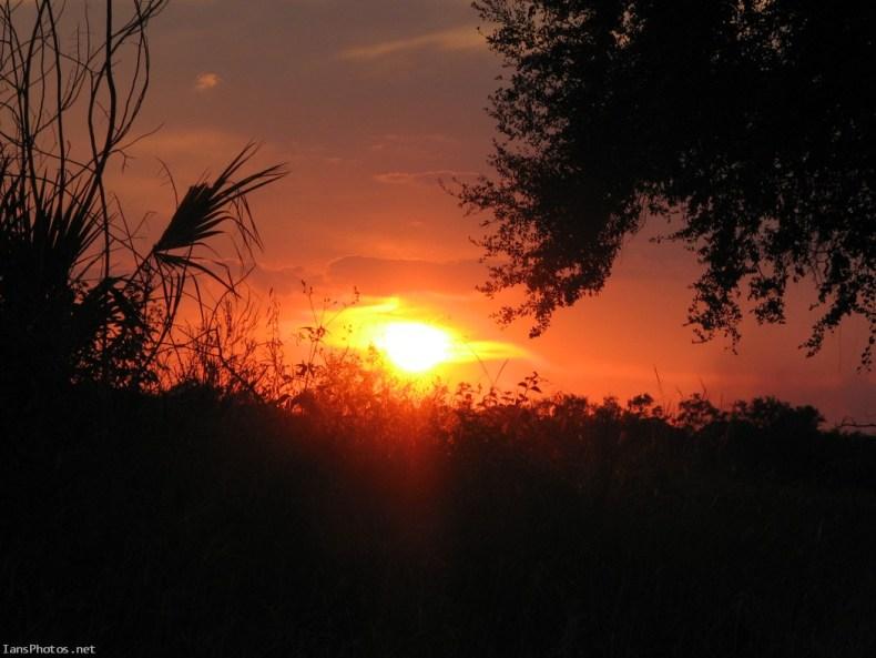 Florida pasture sunset