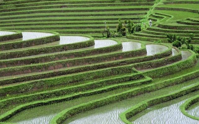 Land Usage pattern in India
