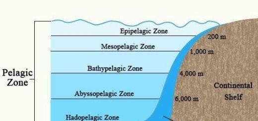 Oceanic Zones: Pelagic, Eupelagic, Mesopelagic etc.