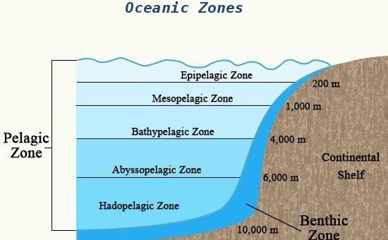 Oceanic Zones: Pelagic, Eupelagic, Mesopelagic etc.