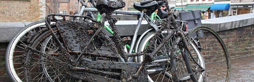 Learn the bicycle crash statistics reported by the NHTSA.