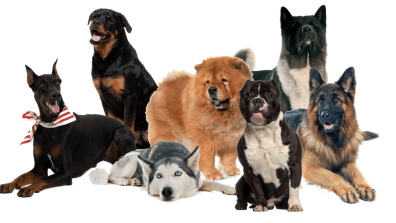 Graphic of all the risky dog breeds