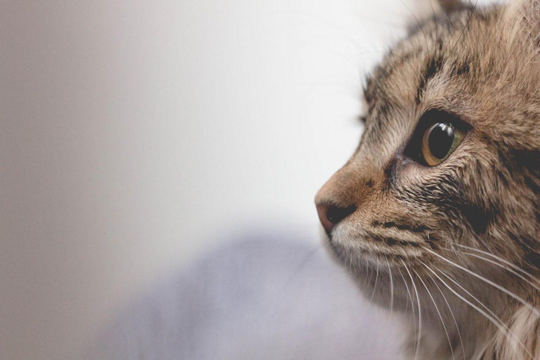 This cat needs pet insurance