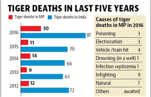 M.P. lost 33 tigers in 2016