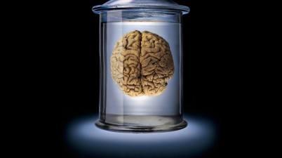 cerveau-en-bocal brain