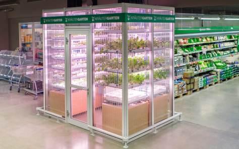 Indoor farm in Berlin's Metro Cash & Carry supermarket. Photograph: Merav Maroody/InFarm