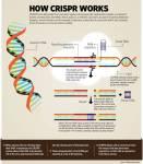 Des légumes modifiés avec CRISPR-Cas9, cultivés, récoltés, et cuisinés pour la toute première fois