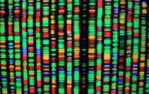 Modèle de génome humain