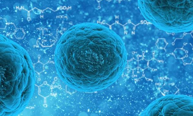 cellules-souches