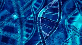 dna-cell adn crispr